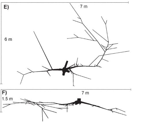 Pušies šaknų sistema (Kalliokoski T. ir kt. Silva Fennica, 2008 m.).